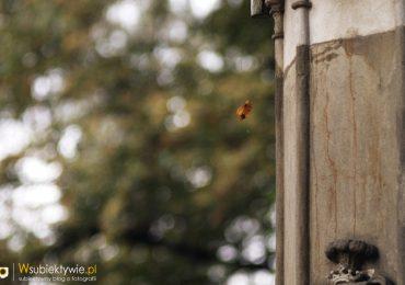 Fotograf musi być wyspany + sample z obiektywu Jupiter 37A 135mm f/3,5 (m42)