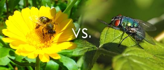 Jesteś muchą czy pszczołą?