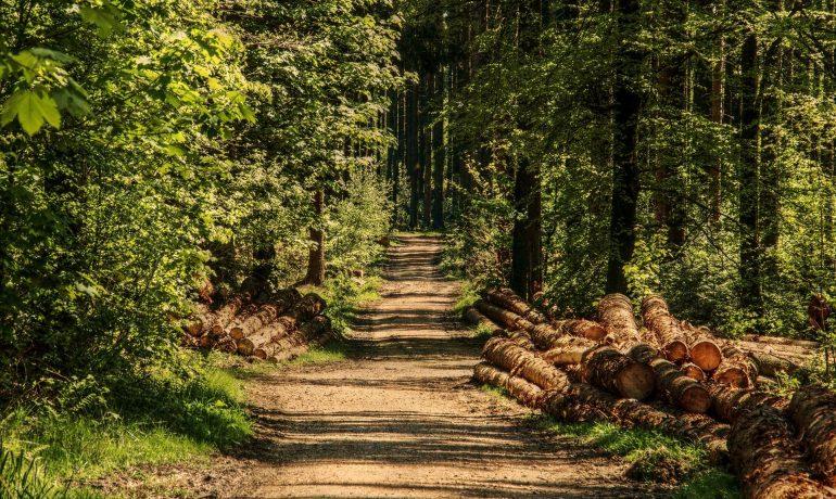 Z drogi śledzie, bo leśny spacerowicz jedzie!